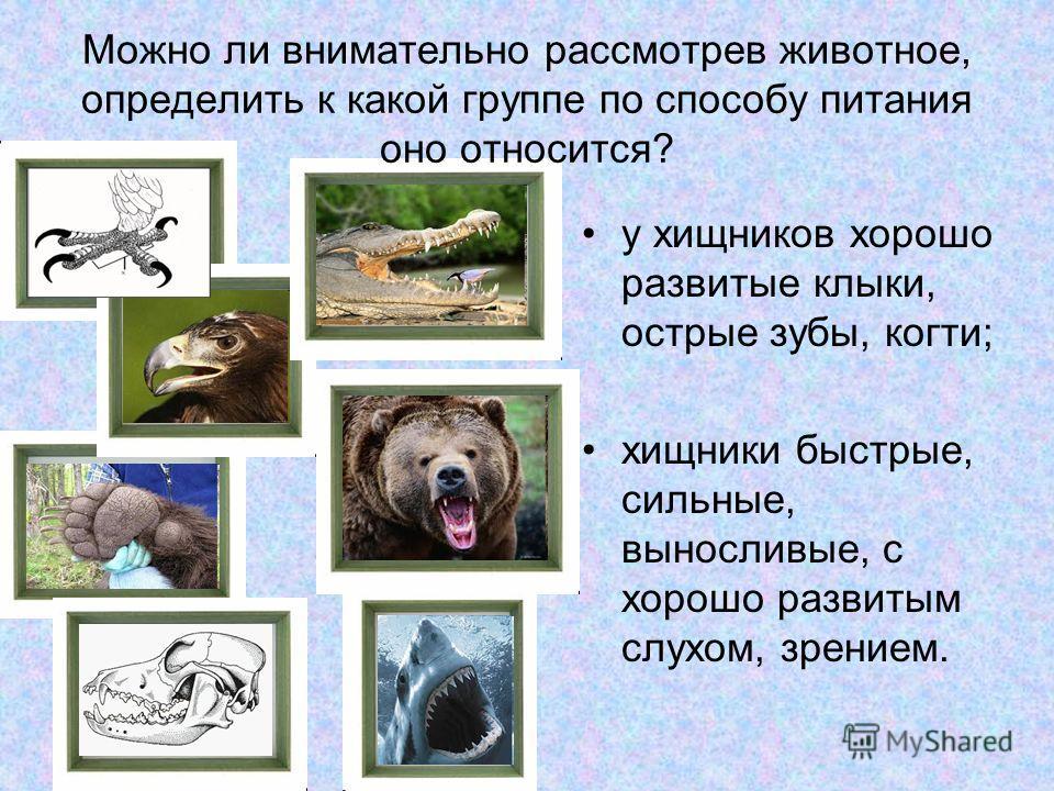 Можно ли внимательно рассмотрев животное, определить к какой группе по способу питания оно относится? у хищников хорошо развитые клыки, острые зубы, когти; хищники быстрые, сильные, выносливые, с хорошо развитым слухом, зрением.