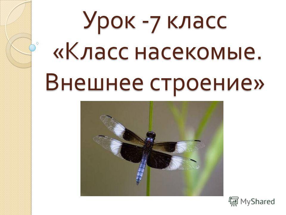 Урок -7 класс « Класс насекомые. Внешнее строение »