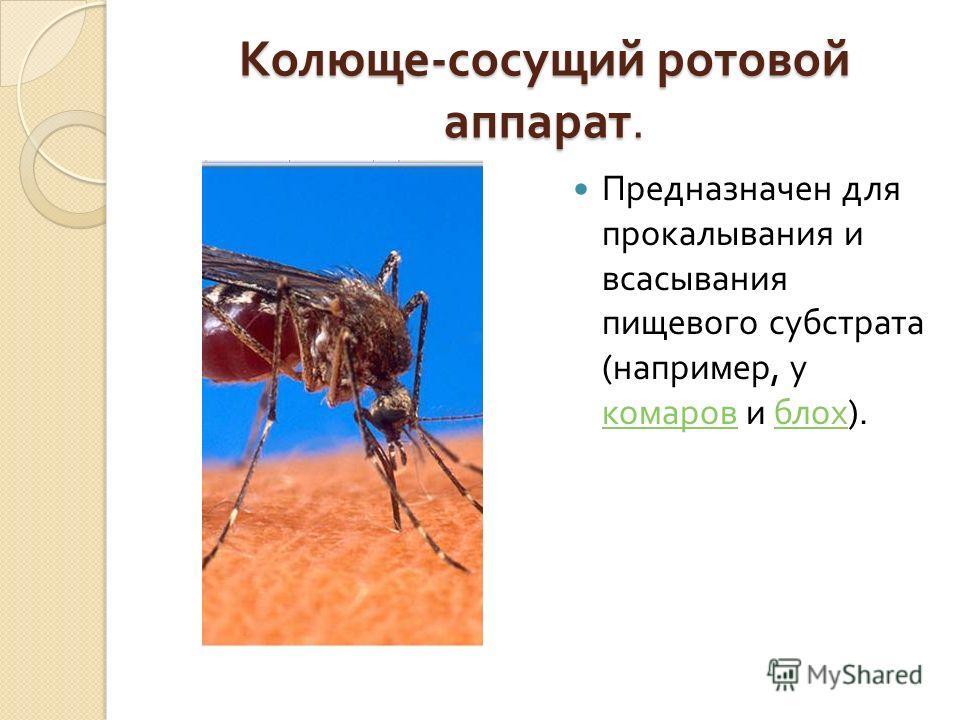 Колюще - сосущий ротовой аппарат. Предназначен для прокалывания и всасывания пищевого субстрата ( например, у комаров и блох ). комаров блох