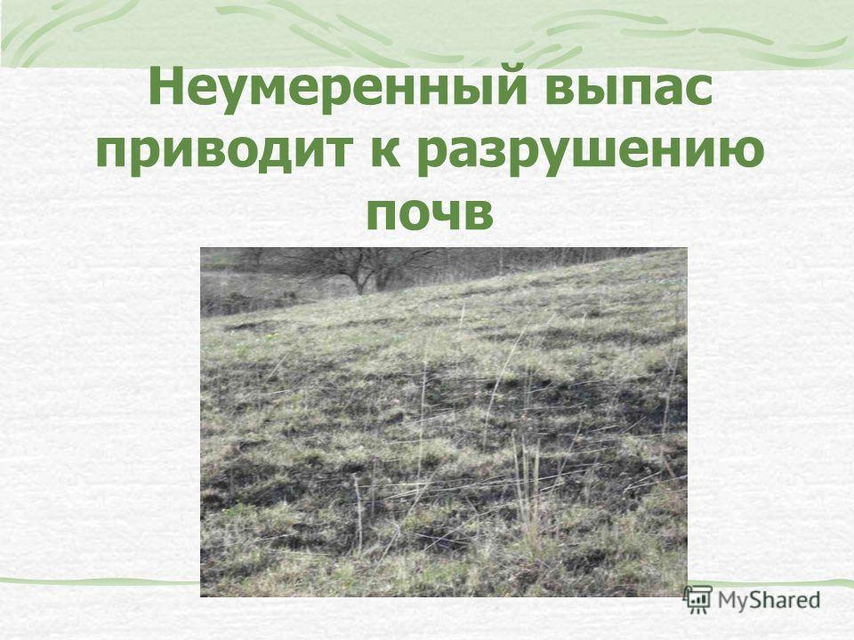 Неумеренный выпас приводит к разрушению почв