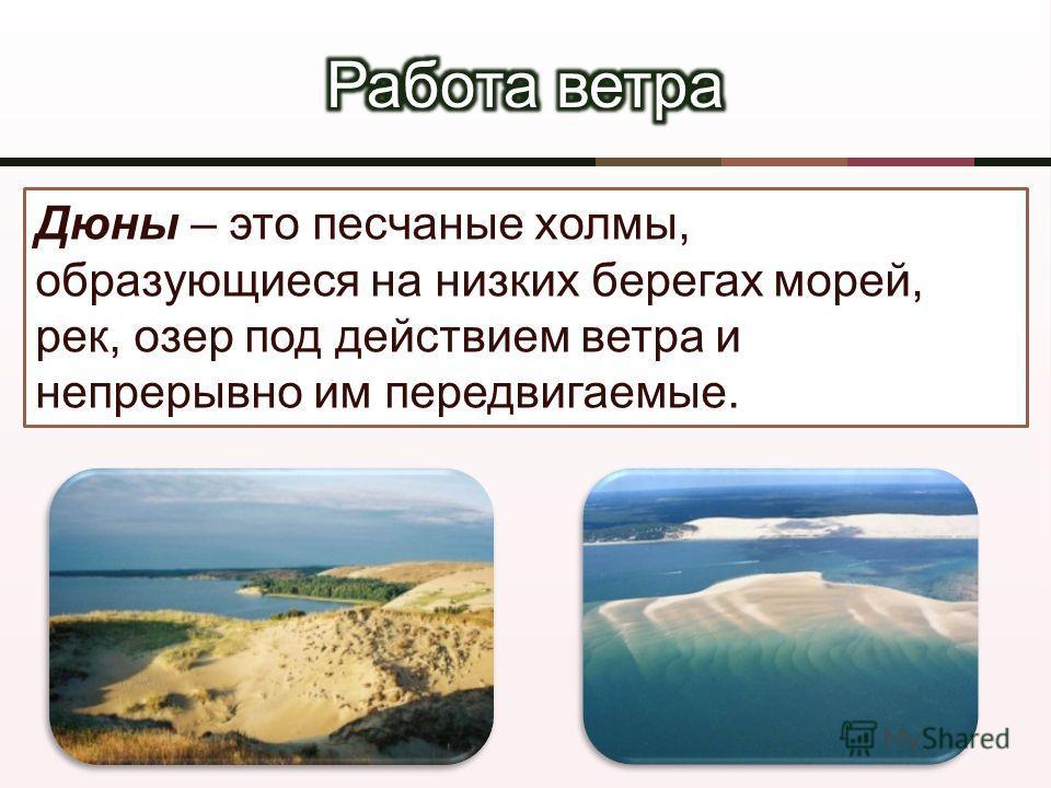Дюны – это песчаные холмы, образующиеся на низких берегах морей, рек, озер под действием ветра и непрерывно им передвигаемые.
