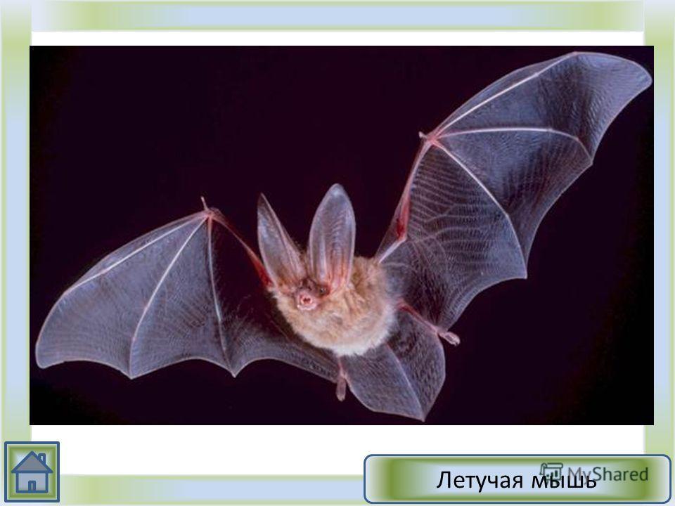 1.Это животное относится к типу хордовых 2.Ведет ночной образ жизни 3.Способно к полету. В строении скелета хорошо развит киль 4.Питаясь насекомыми, уничтожают вредителей лесного и сельского хозяйства 5.На зиму улетают в теплые края или впадают в спя