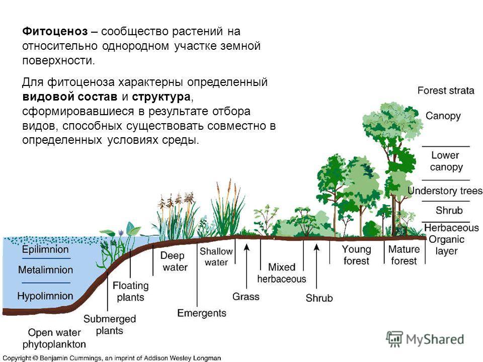 Фитоценоз – сообщество растений на относительно однородном участке земной поверхности. Для фитоценоза характерны определенный видовой состав и структура, сформировавшиеся в результате отбора видов, способных существовать совместно в определенных усло