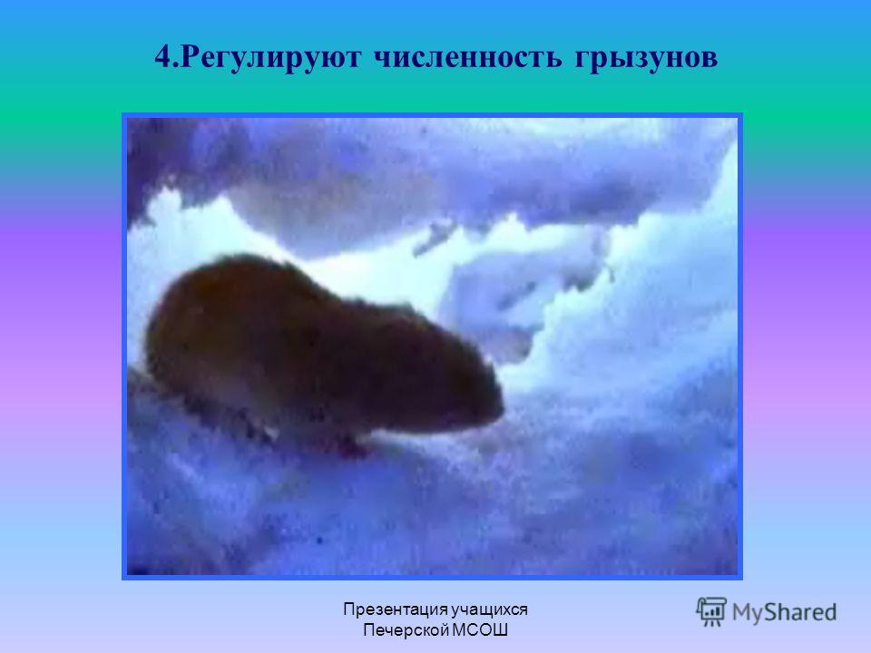 Презентация учащихся Печерской МСОШ 4.Регулируют численность грызунов