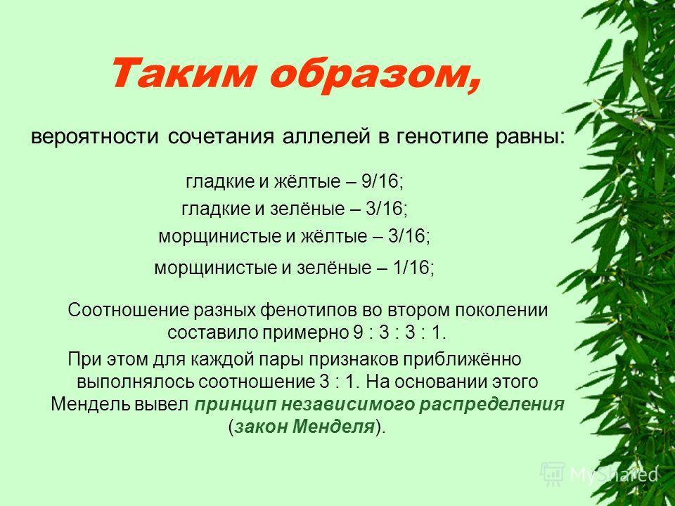 Таким образом, вероятности сочетания аллелей в генотипе равны: гладкие и жёлтые – 9/16; гладкие и зелёные – 3/16; морщинистые и жёлтые – 3/16; морщинистые и зелёные – 1/16; Соотношение разных фенотипов во втором поколении составило примерно 9 : 3 : 3