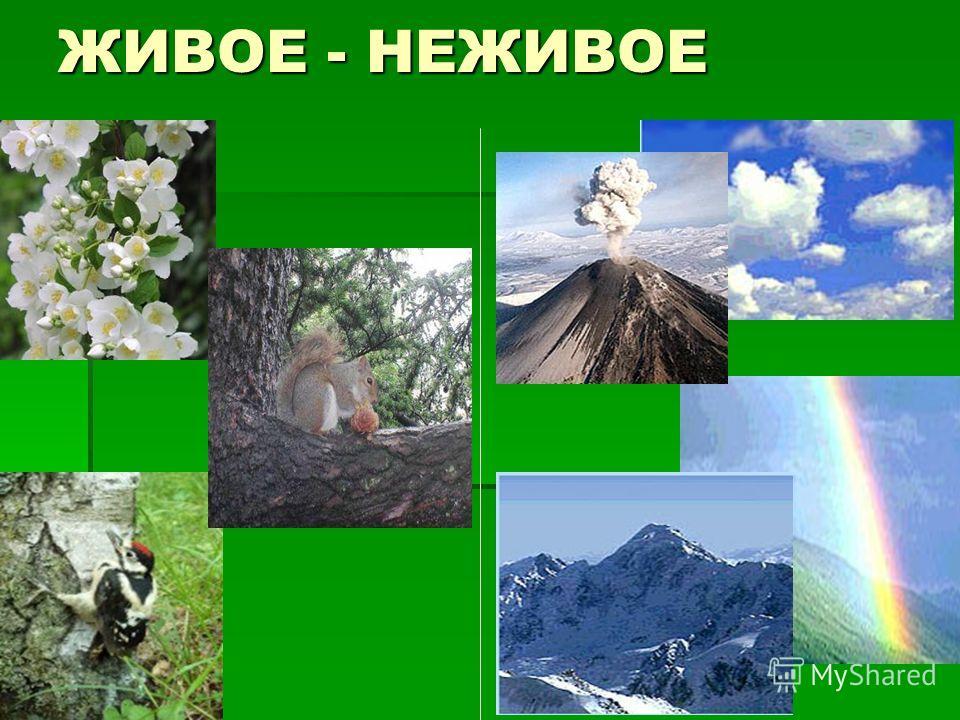 Природа и человек урок мы и