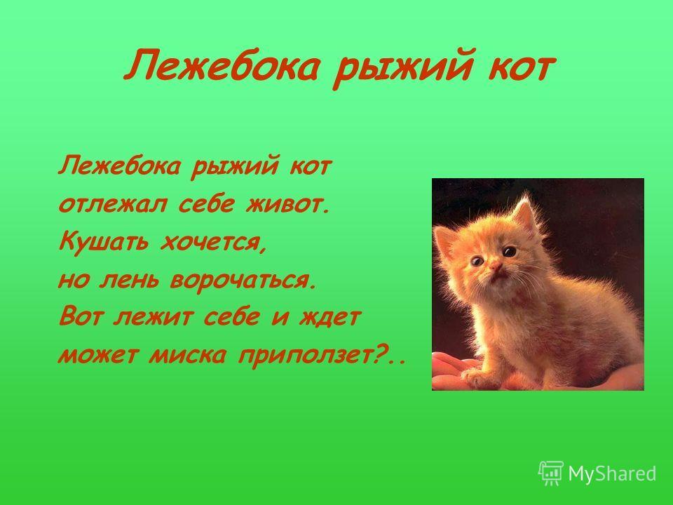 Лежебока pыжий кот отлежал себе живот. Кушать хочется, но лень воpочаться. Вот лежит себе и ждет может миска пpиползет?..