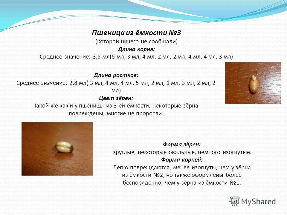 Пшеница из ёмкости 3 (которой ничего не сообщали) Длина корня: Среднее значение: 3,5 мл(6 мл, 3 мл, 4 мл, 2 мл, 2 мл, 4 мл, 4 мл, 3 мл) Длина ростков: Среднее значение: 2,8 мл( 3 мл, 4 мл, 4 мл, 5 мл, 2 мл, 1 мл, 3 мл, 2 мл, 2 мл) Цвет зёрен: Такой ж