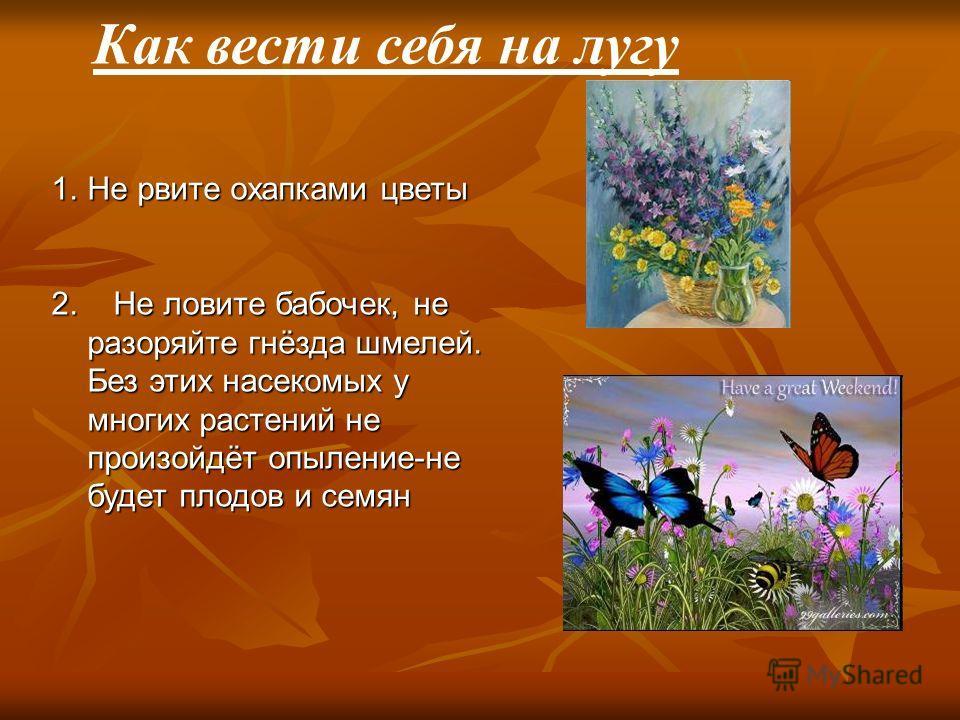 1.Не рвите охапками цветы 2. Не ловите бабочек, не разоряйте гнёзда шмелей. Без этих насекомых у многих растений не произойдёт опыление-не будет плодов и семян Как вести себя на лугу