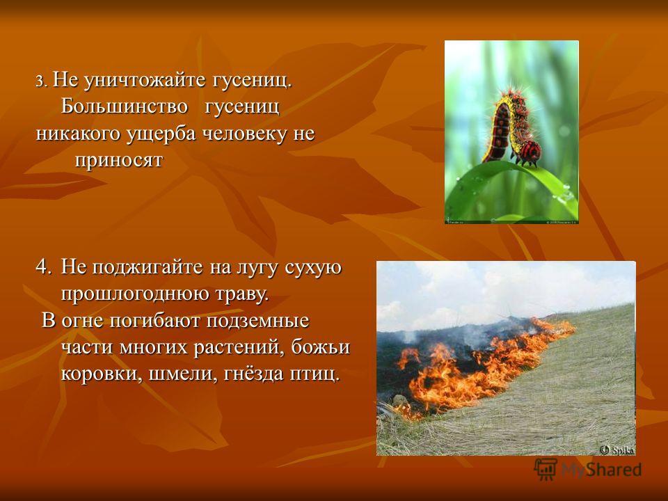 3. Не уничтожайте гусениц. Большинство гусениц никакого ущерба человеку не приносят приносят 4.Не поджигайте на лугу сухую прошлогоднюю траву. В огне погибают подземные части многих растений, божьи коровки, шмели, гнёзда птиц. В огне погибают подземн