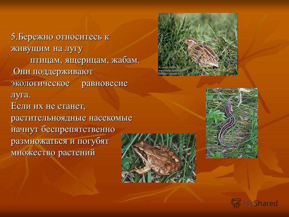 5.Бережно относитесь к живущим на лугу птицам, ящерицам, жабам. птицам, ящерицам, жабам. Они поддерживают экологическое равновесие луга. Они поддерживают экологическое равновесие луга. Если их не станет, растительноядные насекомые начнут беспрепятств