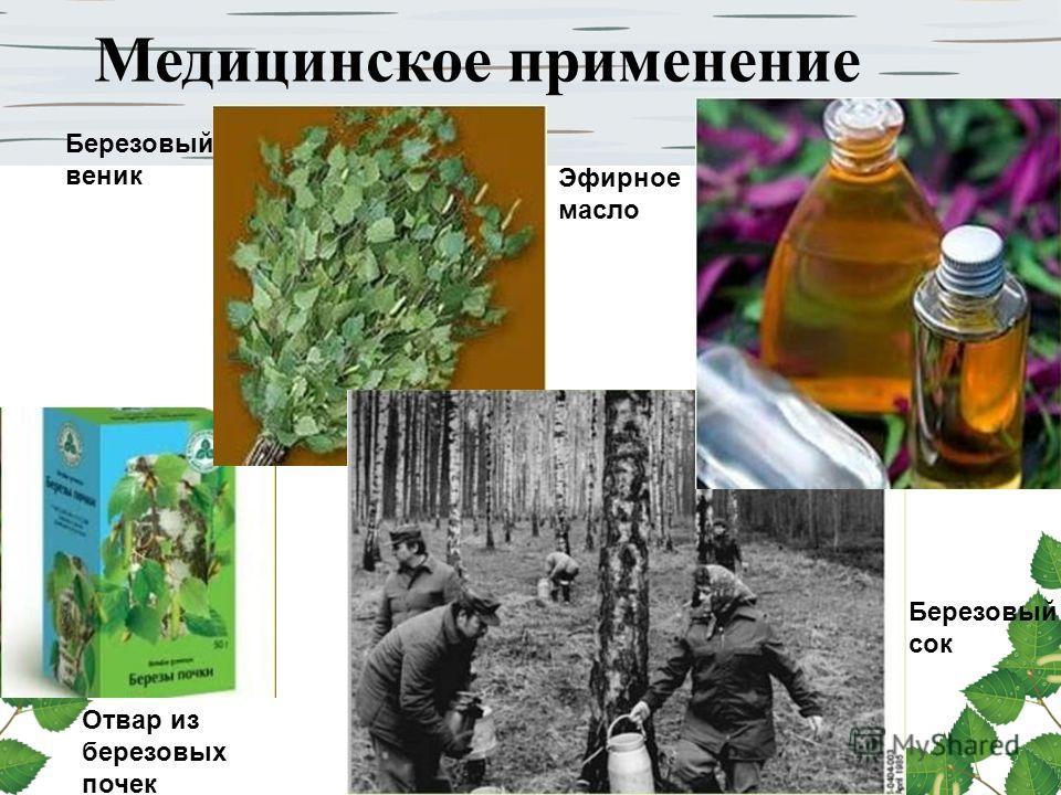 Медицинское применение Березовый веник Березовый сок Эфирное масло Отвар из березовых почек