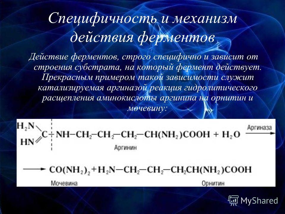 Специфичность и механизм действия ферментов Действие ферментов, строго специфично и зависит от строения субстрата, на который фермент действует. Прекрасным примером такой зависимости служит катализируемая аргиназой реакция гидролитического расщеплени