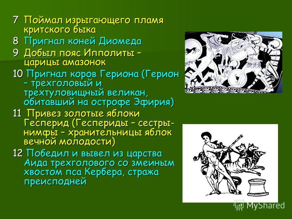 7Поймал изрыгающего пламя критского быка 8Пригнал коней Диомеда 9Добыл пояс Ипполиты – царицы амазонок 10 Пригнал коров Гериона (Герион – трехголовый и трехтуловищный великан, обитавший на острофе Эфирия) 11 Привез золотые яблоки Гесперид (Геспериды