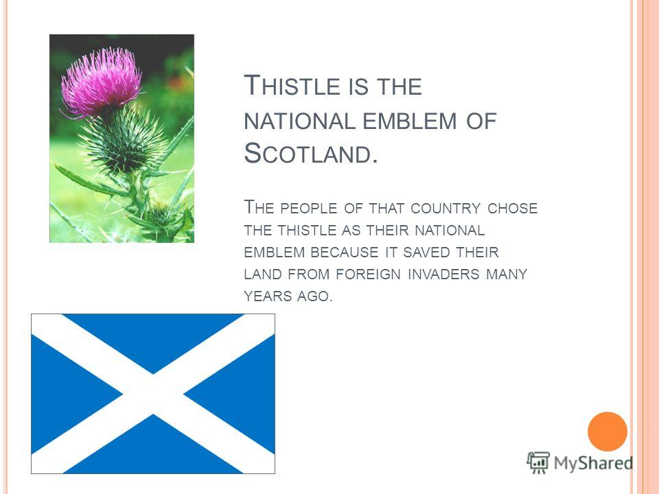 T HISTLE IS THE NATIONAL EMBLEM OF S COTLAND. T HE PEOPLE OF THAT COUNTRY CHOSE THE THISTLE AS THEIR NATIONAL EMBLEM BECAUSE IT SAVED THEIR LAND FROM FOREIGN INVADERS MANY YEARS AGO.
