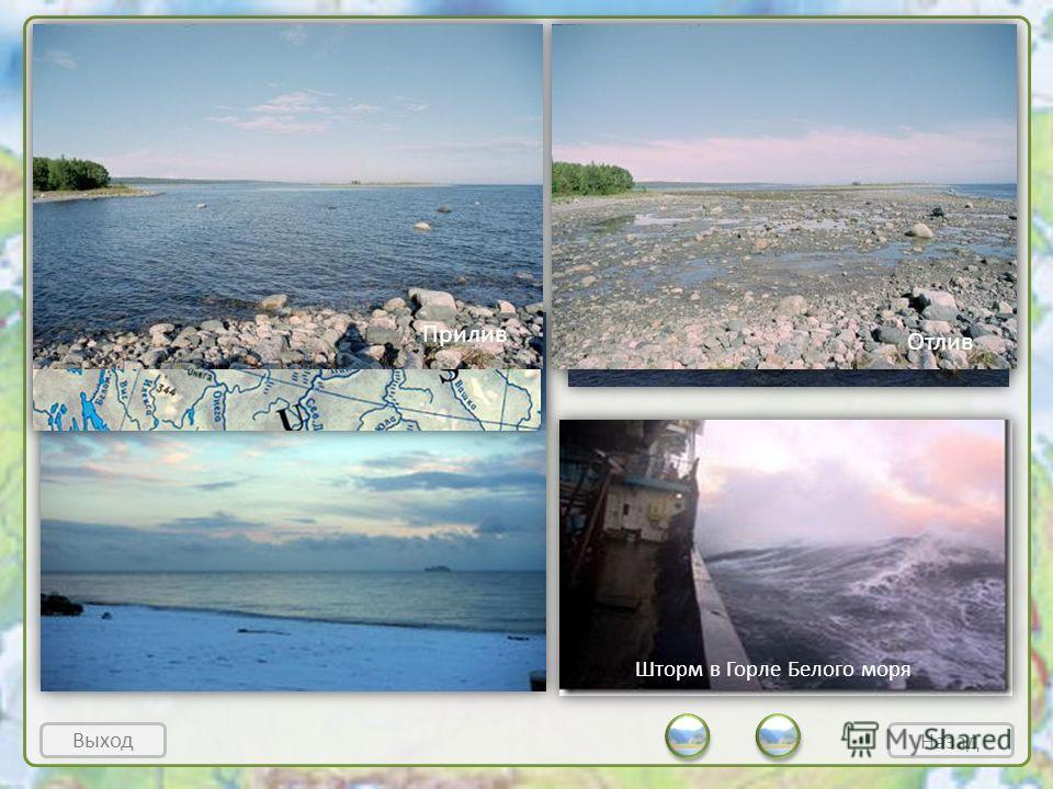 Белое море Выход Климат суровый, лето на юге длится 3 месяца, на севере – 1,5. Часты бывают туманы. Воды моря холодные, хотя на поверхности за лето иногда успевают прогреться до + 16-18°. Соленость 24- 34,5. Зимой покрыто льдом. Приливы до 10 м (в Ме