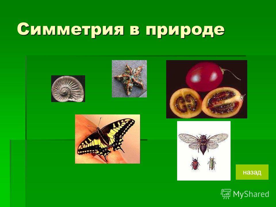 Симметрия в природе назад