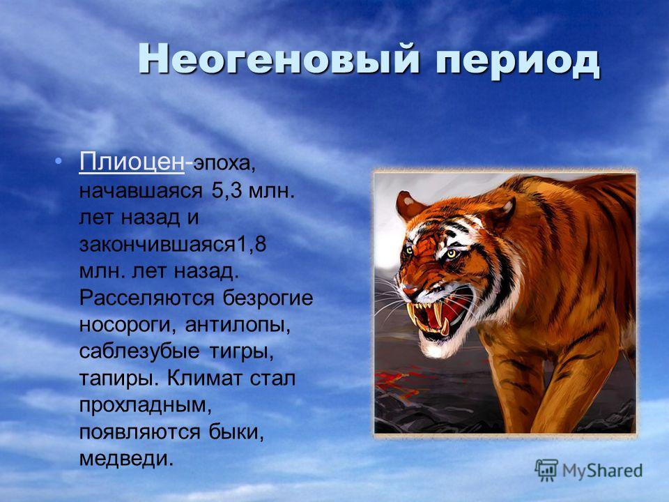 Неогеновый период Плиоцен- эпоха, начавшаяся 5,3 млн. лет назад и закончившаяся1,8 млн. лет назад. Расселяются безрогие носороги, антилопы, саблезубые тигры, тапиры. Климат стал прохладным, появляются быки, медведи.