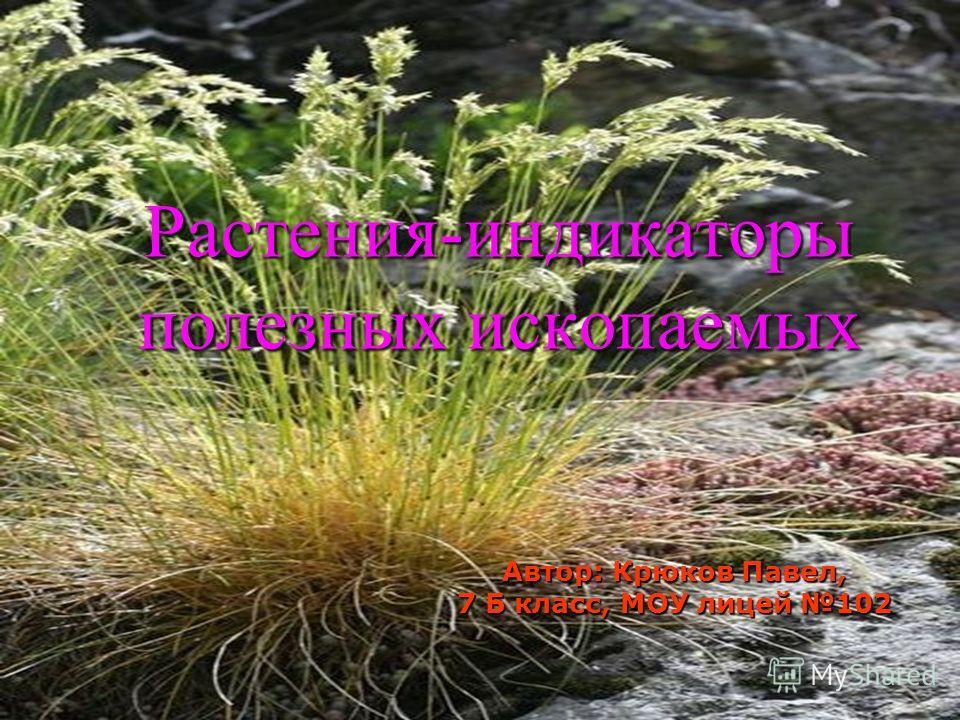 Растения-индикаторы полезных ископаемых Автор: Крюков Павел, 7 Б класс, МОУ лицей 102