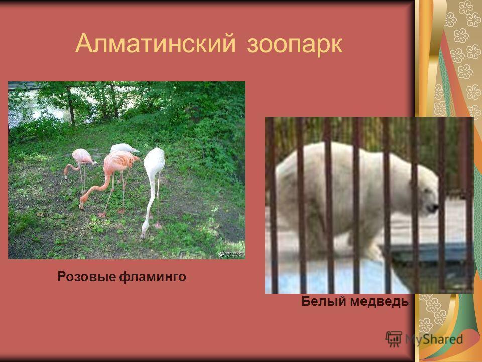 Алматинский зоопарк Розовые фламинго Белый медведь