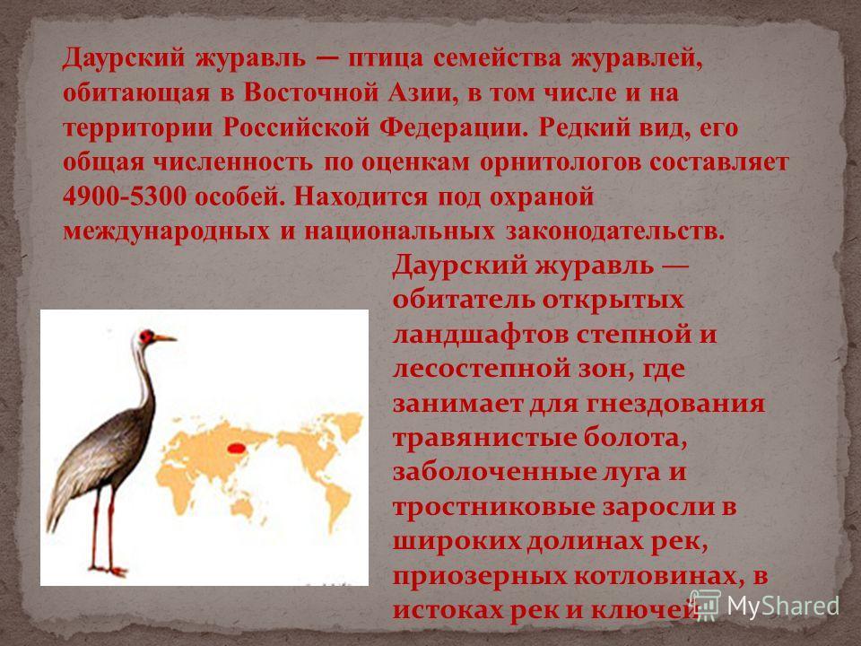 Даурский журавль птица семейства журавлей, обитающая в Восточной Азии, в том числе и на территории Российской Федерации. Редкий вид, его общая численность по оценкам орнитологов составляет 4900-5300 особей. Находится под охраной международных и нацио