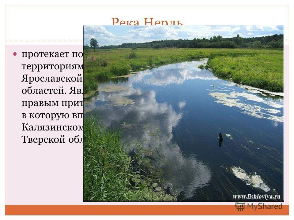 Река Нерль протекает по территориям Ярославской и Тверской областей. Является правым притоком Волги, в которую впадает в Калязинском районе Тверской области.