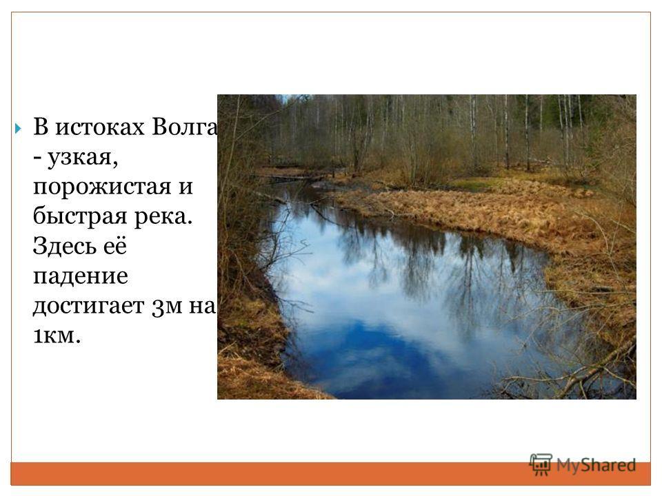 В истоках Волга - узкая, порожистая и быстрая река. Здесь её падение достигает 3м на 1км.