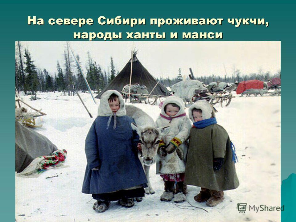 На севере Сибири проживают чукчи, народы ханты и манси