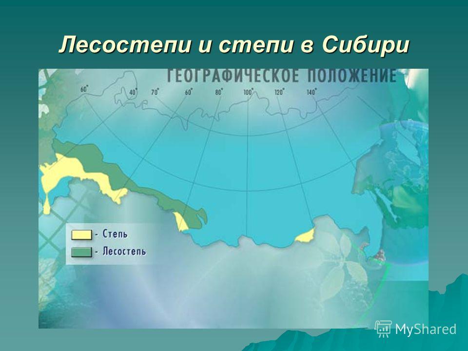 Лесостепи и степи в Сибири