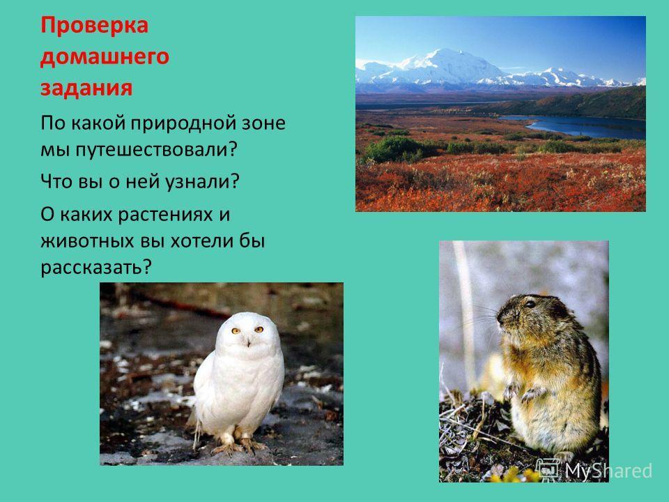 Проверка домашнего задания По какой природной зоне мы путешествовали? Что вы о ней узнали? О каких растениях и животных вы хотели бы рассказать?