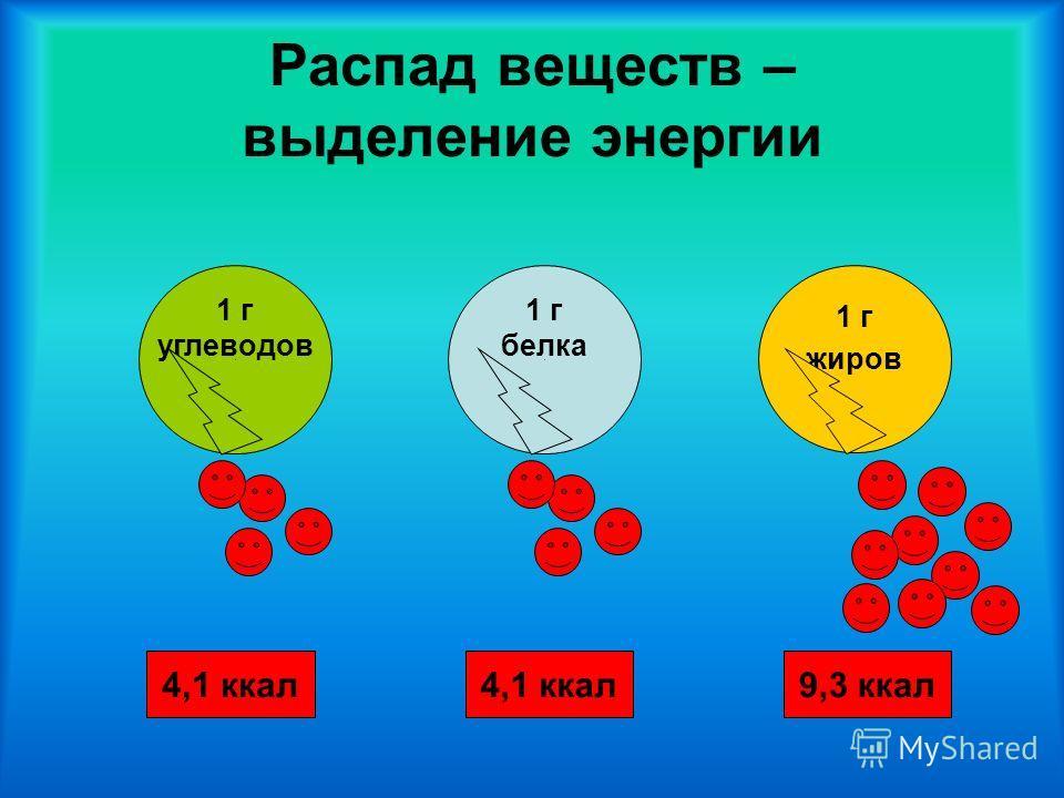 Распад веществ – выделение энергии 1 г белка 1 г углеводов 4,1 ккал9,3 ккал4,1 ккал 1 г жиров