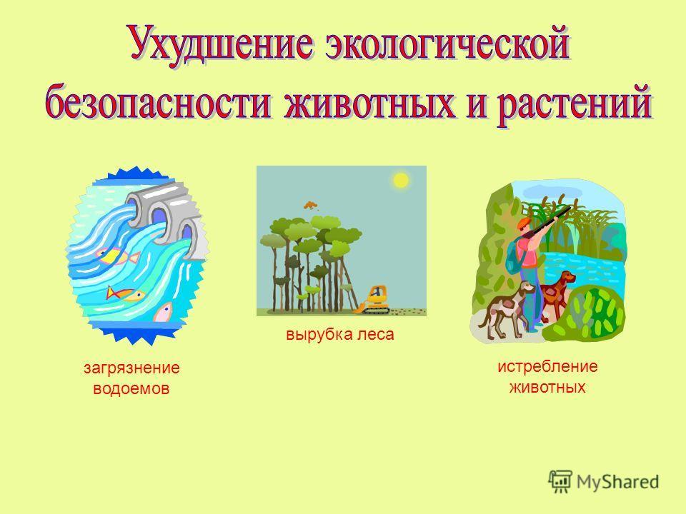 загрязнение водоемов истребление животных вырубка леса