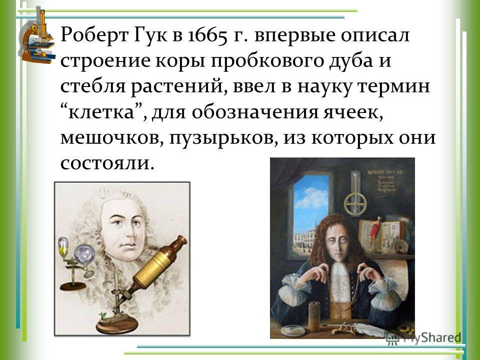 Роберт Гук в 1665 г. впервые описал строение коры пробкового дуба и стебля растений, ввел в науку термин клетка, для обозначения ячеек, мешочков, пузырьков, из которых они состояли.