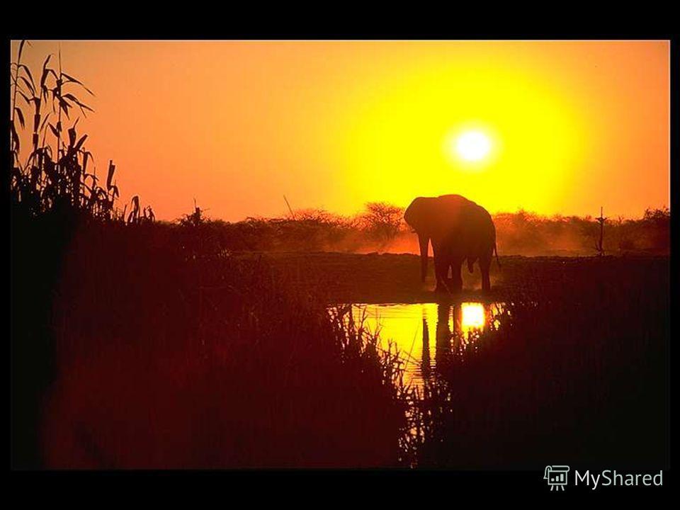 Хотя у слонов нет врагов в дикой природе, они занесены в Международную Красную книгу и являются охраняемыми животными.