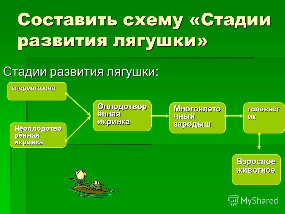 Составить схему «Стадии