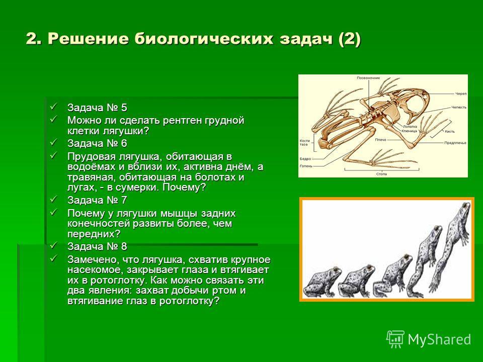 Задача 5 Задача 5 Можно ли сделать рентген грудной клетки лягушки? Можно ли сделать рентген грудной клетки лягушки? Задача 6 Задача 6 Прудовая лягушка, обитающая в водоёмах и вблизи их, активна днём, а травяная, обитающая на болотах и лугах, - в суме