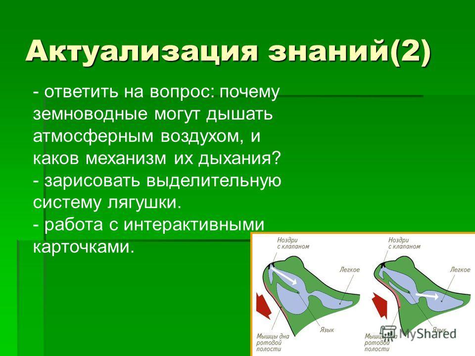 Актуализация знаний(2) - ответить на вопрос: почему земноводные могут дышать атмосферным воздухом, и каков механизм их дыхания? - зарисовать выделительную систему лягушки. - работа с интерактивными карточками.