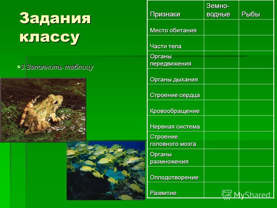Задания классу Признаки Земно- водные Рыбы Место обитания Части тела Органы передвижения Органы дыхания Строение сердца Кровообращение Нервная система Строение головного мозга Органы размножения Оплодотворение Развитие 3.Заполнить таблицу 3.Заполнить