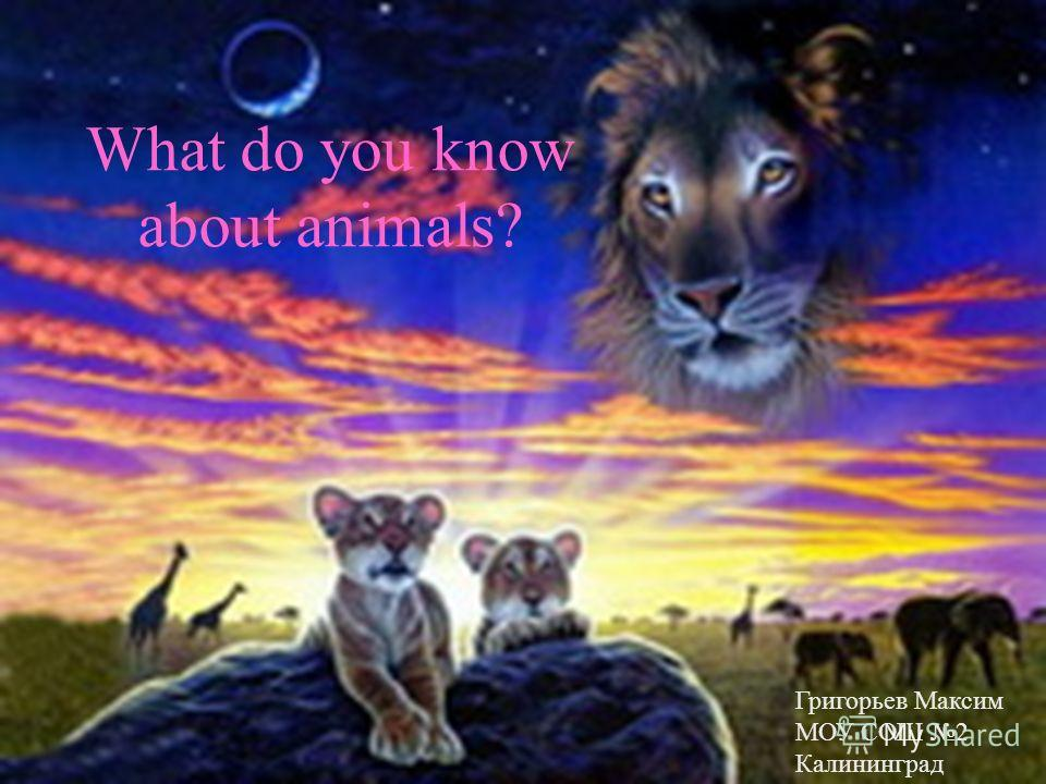 What do you know about animals? Григорьев Максим МОУ СОШ 2 Калининград