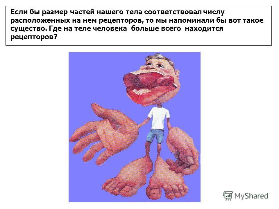 Если бы размер частей нашего тела соответствовал числу расположенных на нем рецепторов, то мы напоминали бы вот такое существо. Где на теле человека больше всего находится рецепторов?