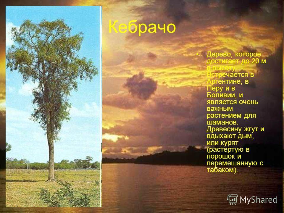 Кебрачо Дерево, которое достигает до 20 м в высоту. Встречается в Аргентине, в Перу и в Боливии, и является очень важным растением для шаманов. Древесину жгут и вдыхают дым, или курят (растертую в порошок и перемешанную с табаком).