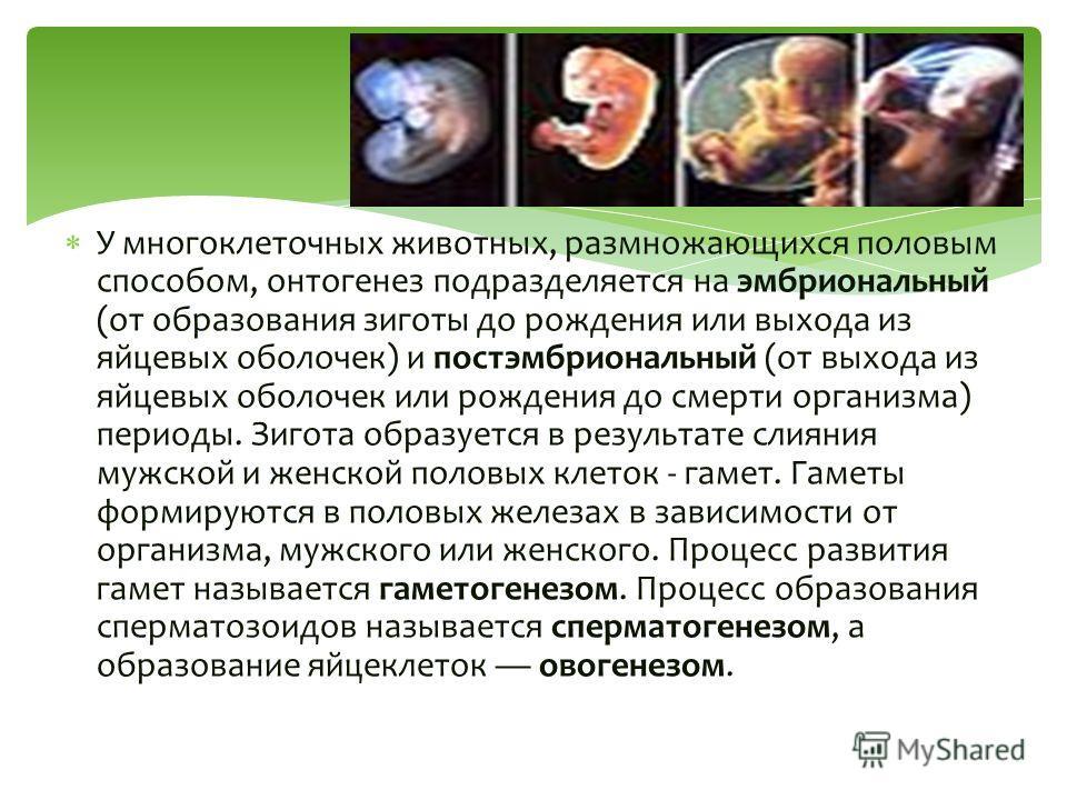 У многоклеточных животных, размножающихся половым способом, онтогенез подразделяется на эмбриональный (от образования зиготы до рождения или выхода из яйцевых оболочек) и постэмбриональный (от выхода из яйцевых оболочек или рождения до смерти организ