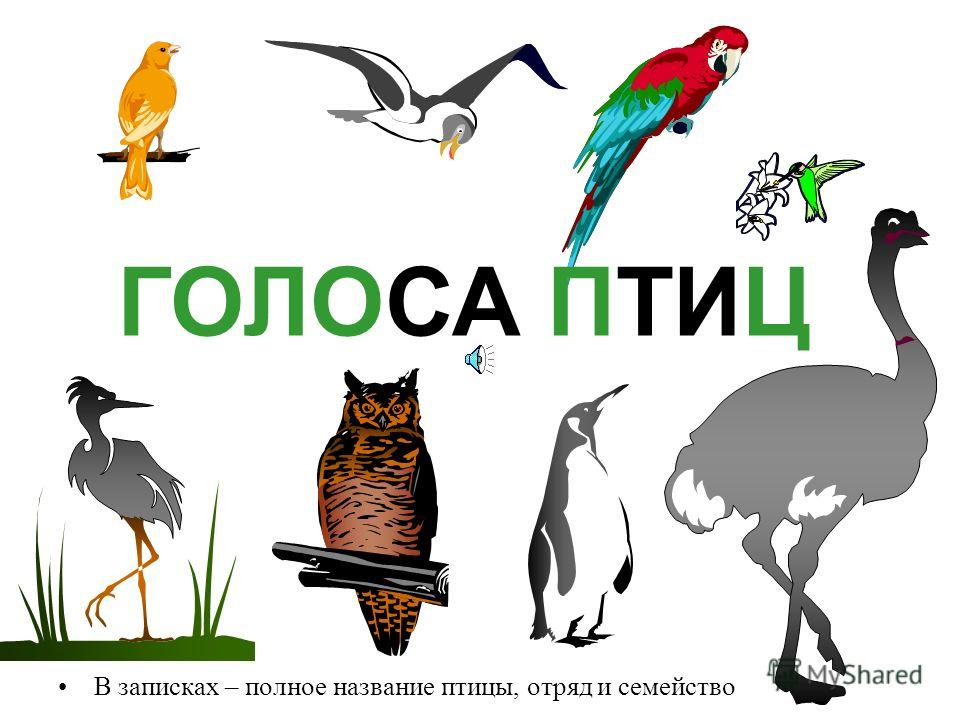 Звуки птиц скачать бесплатно перелетных птиц
