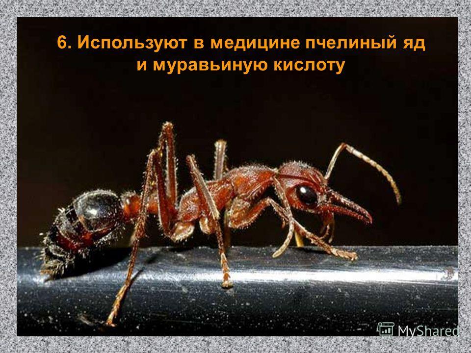 6. Используют в медицине пчелиный яд и муравьиную кислоту
