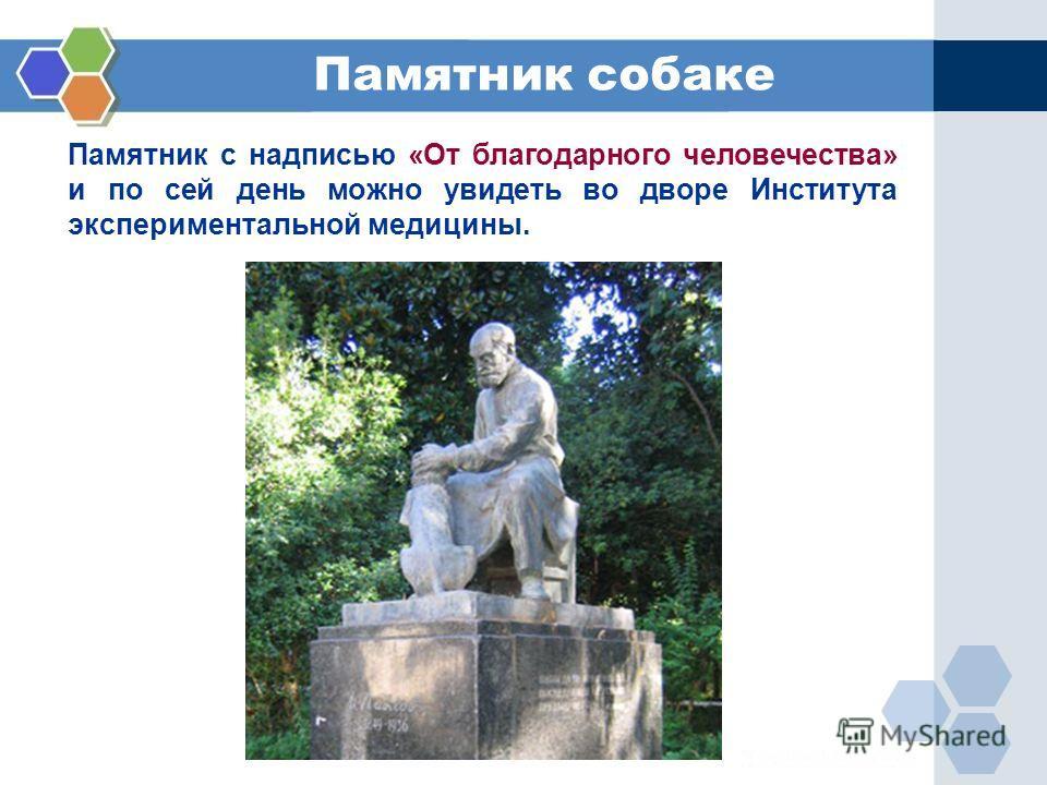 Памятник с надписью «От благодарного человечества» и по сей день можно увидеть во дворе Института экспериментальной медицины. Памятник собаке