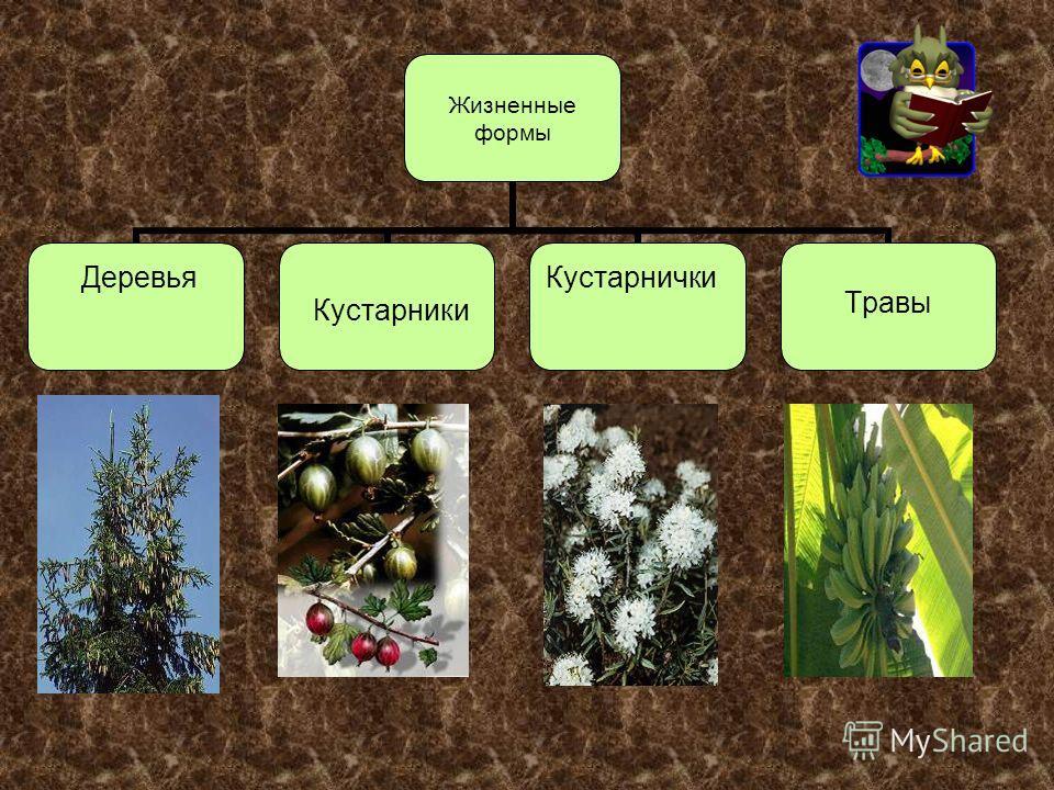 Кустарники Травы ДеревьяКустарнички