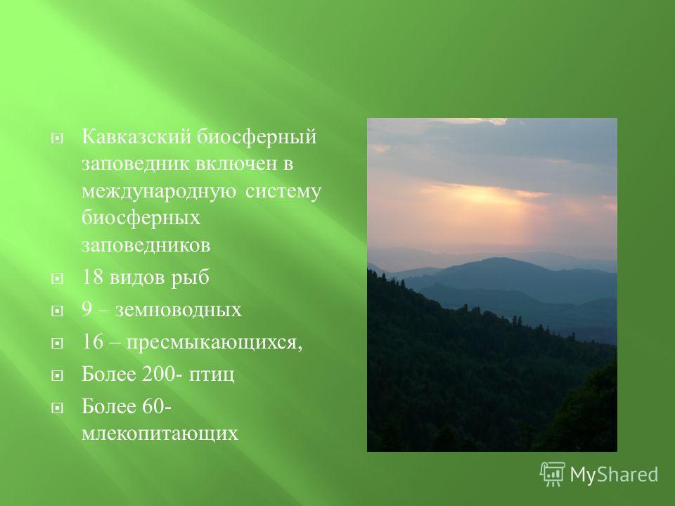 Кавказский биосферный заповедник включен в международную систему биосферных заповедников 18 видов рыб 9 – земноводных 16 – пресмыкающихся, Более 200- птиц Более 60- млекопитающих