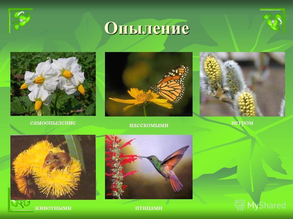Опыление насекомыми ветромсамоопыление животнымиптицами