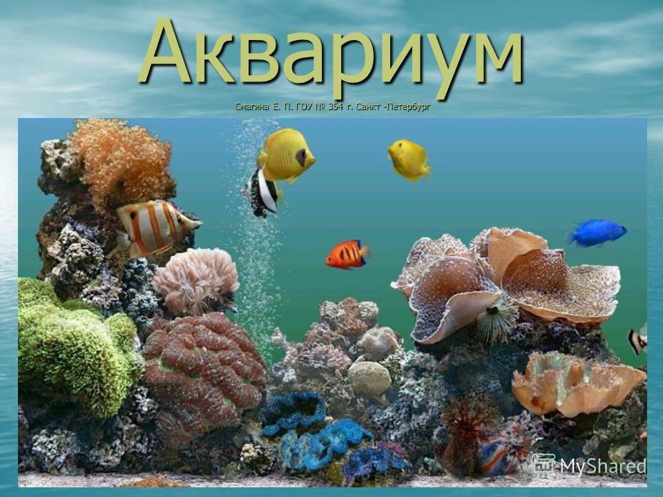 Аквариум Смагина Е. П. ГОУ 354 г. Санкт -Петербург