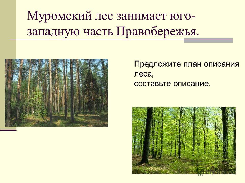 Муромский лес занимает юго- западную часть Правобережья. Предложите план описания леса, составьте описание.